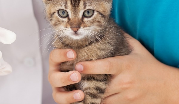 терапия с помощью животных
